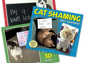 2017 Cat Shaming Daily Calendar