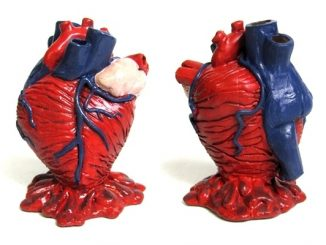 Anatomical Heart Pencil Holder