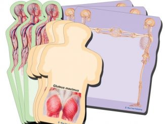 Anatomy Body Sticky Notes Collection