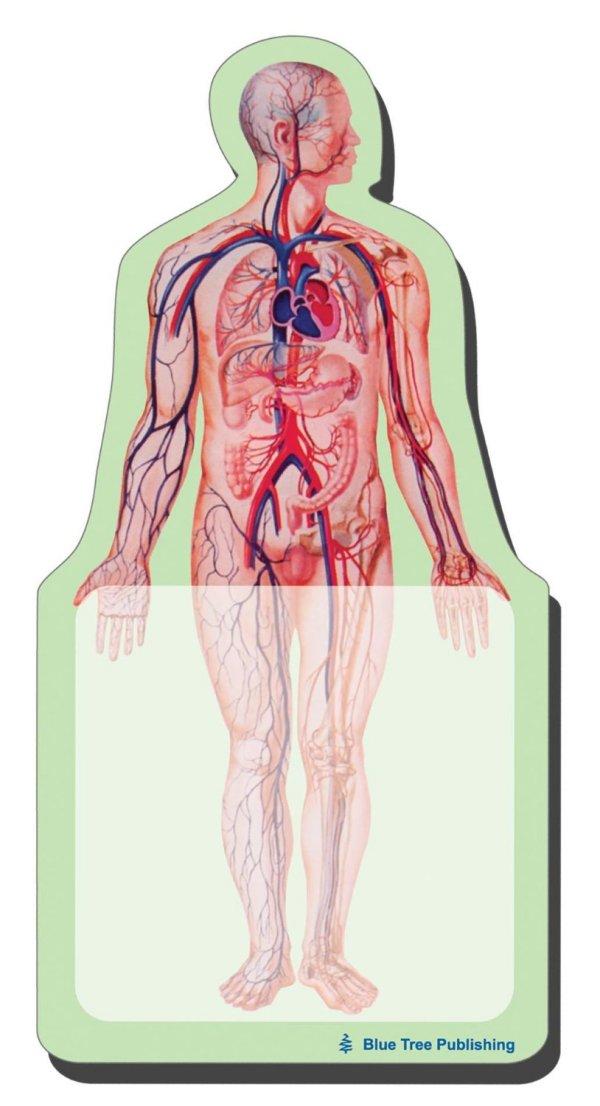 Anatomy Body Sticky Notes Collection