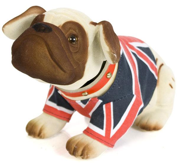 Apprentice Nodding Bulldog