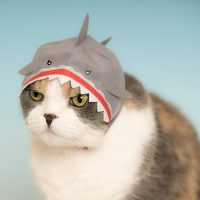 Aquarium Cat Hood Blind Box