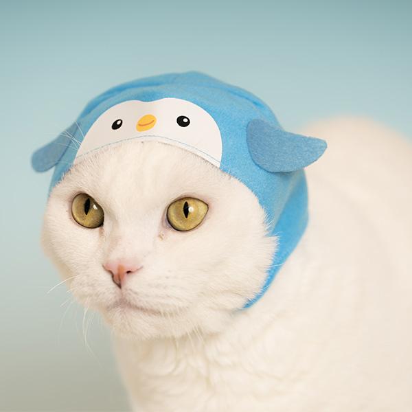 Aquarium Cat Hood Blind Box