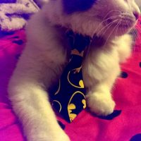 Batman Necktie for Small Dog or Cat