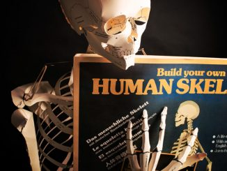 Build Your Own Life Size Human Skeleton Book