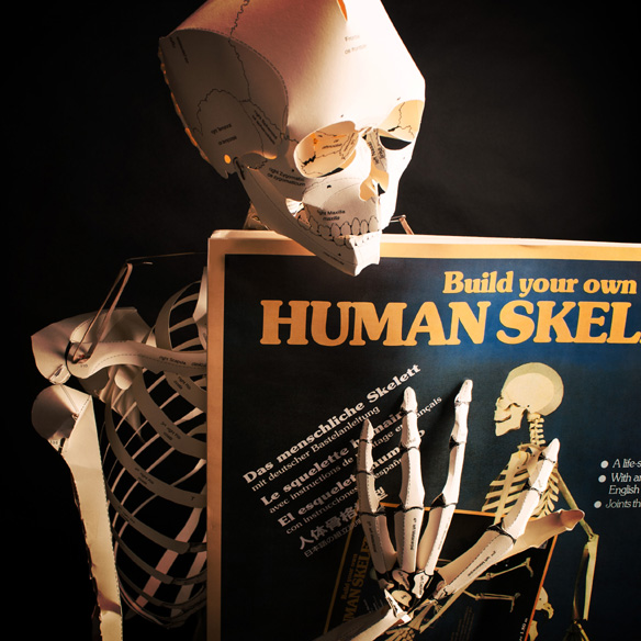 your own life size human skeleton book, Skeleton