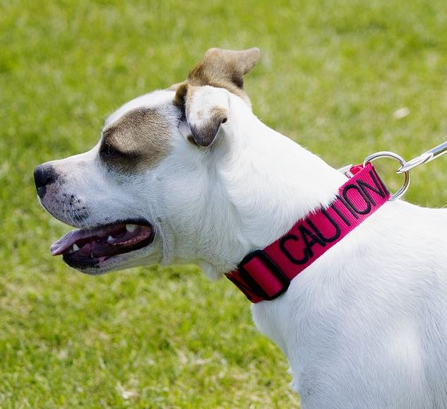 Color-Coded Friendly Dog Collars