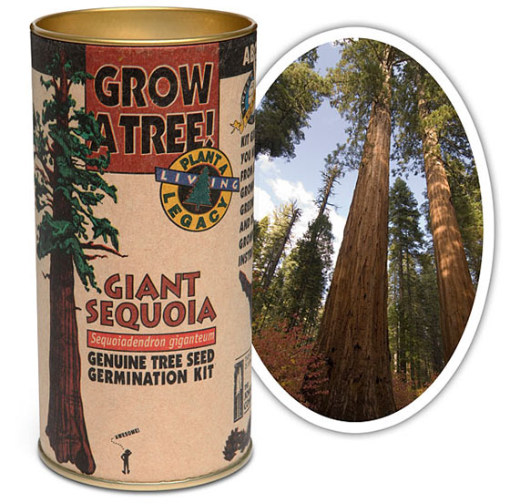 DIY Giant Sequoia