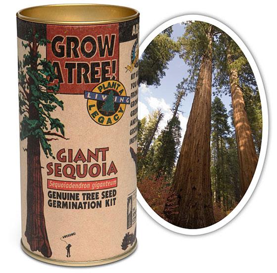 DIY Giant Sequoia