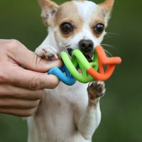 DNA Rubber Chewable Dog Toy