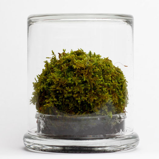 Decorative Terrarium