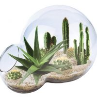 Desert Oasis Double Bubble Terrarium