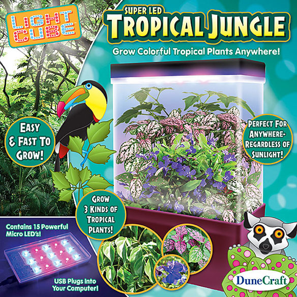 Dunecraft Tropical Jungle Science Kit