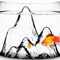 Fishscape Fishbowl
