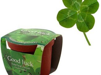 Four-Leaf Clover Planting Kit