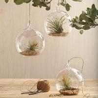 Glass Garden Globe Plant