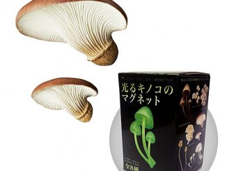 Glow-in-the-Dark Mushroom Magnet Blind Box