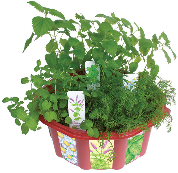 Grow Your Own Herbal Tea Terrarrium