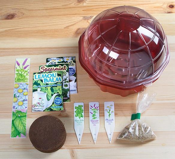 Grow Your Own Herbal Tea Terrarrium
