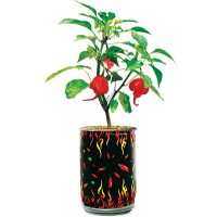 Grow Your Own World's Hottest DIY Pepper