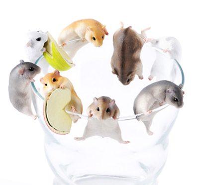Hamster Blind Box
