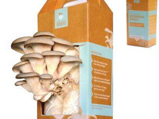 Home Mushroom Growing Kit