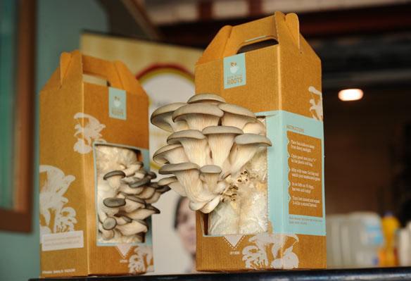 Home Mushroom Kit