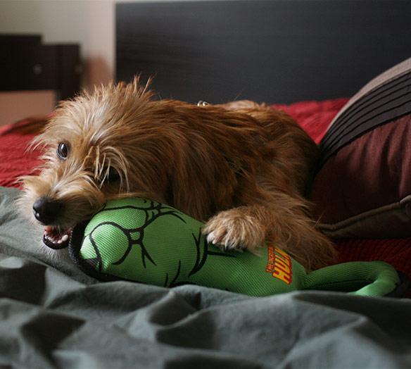 Hulk Fist Dog Pull Toy