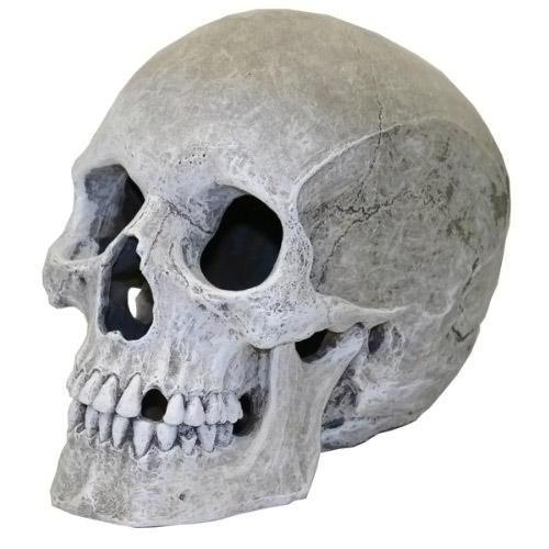 Human Skull Aquarium Ornament