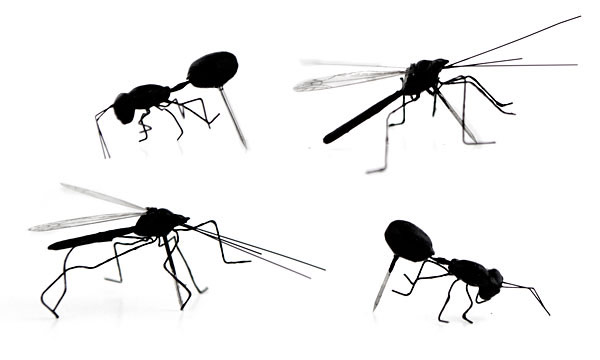 Insect Pushpins