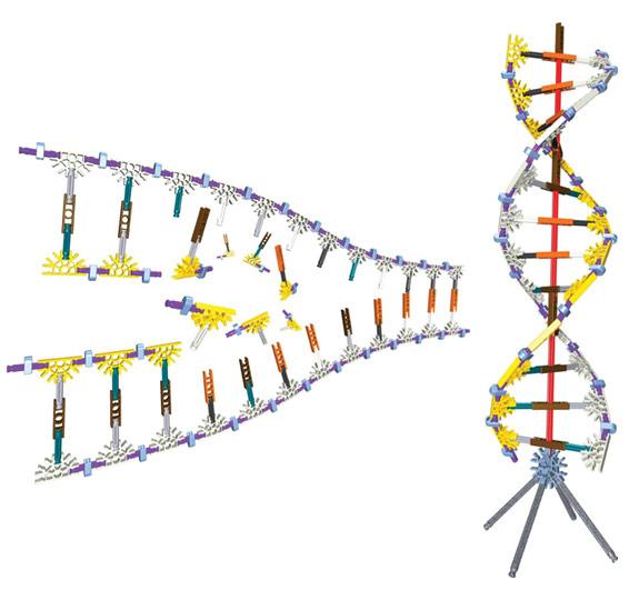 K'Nex DNA Replication Set