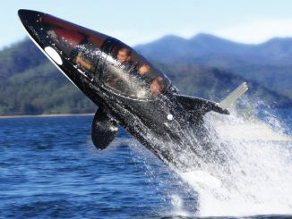 Killer Whale Designed Submarine