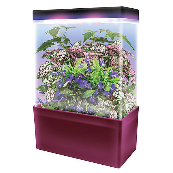 LED Lightcubes Terrarium