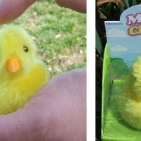 Magic Chick Toy