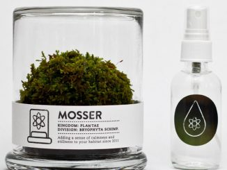 Mosser Decorative Terrarium