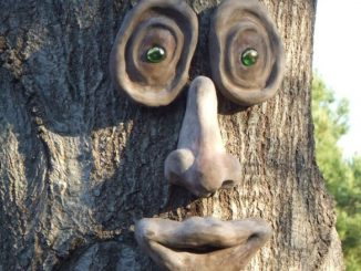Oakley Tree Face
