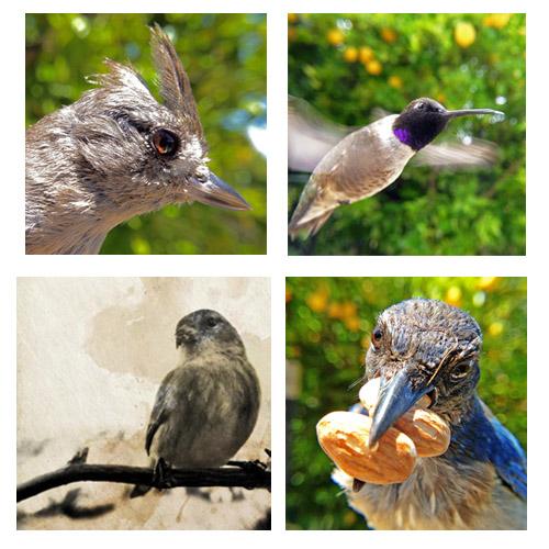 Photos taken with the Bird Photo Booth