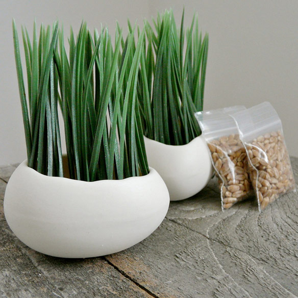 Porcelain Egg Planters and Wheat Grass Kit