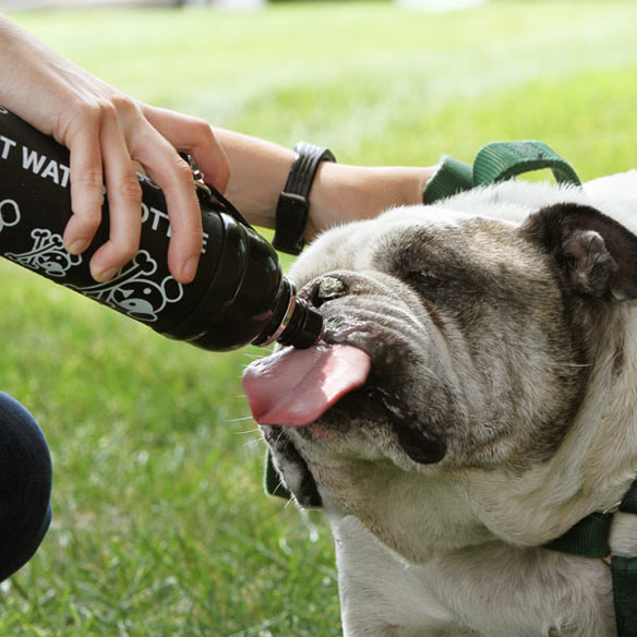 Portable Pet Water Bottle with Roller Ball