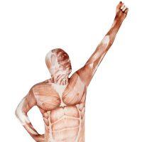 Premium Muscle Morphsuit