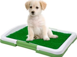 Puppy Potty Trainer - The Indoor Restroom for Pets