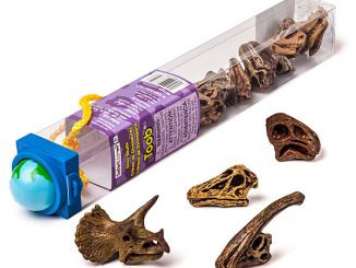 Skull Dinosaurs Toobs