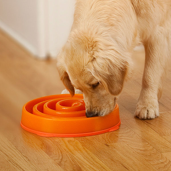Dog Bowls Designed To Slow Down Eating