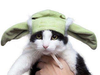 Star Wars Yoda Cat Hood