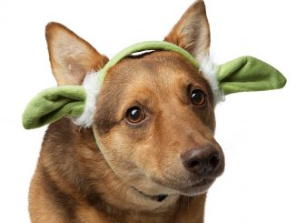 Star Wars Yoda Ears for Dogs