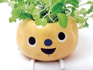 'Taterpots' Spuds that Sprout