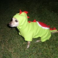 Yoshi Nintendo Dog Costume