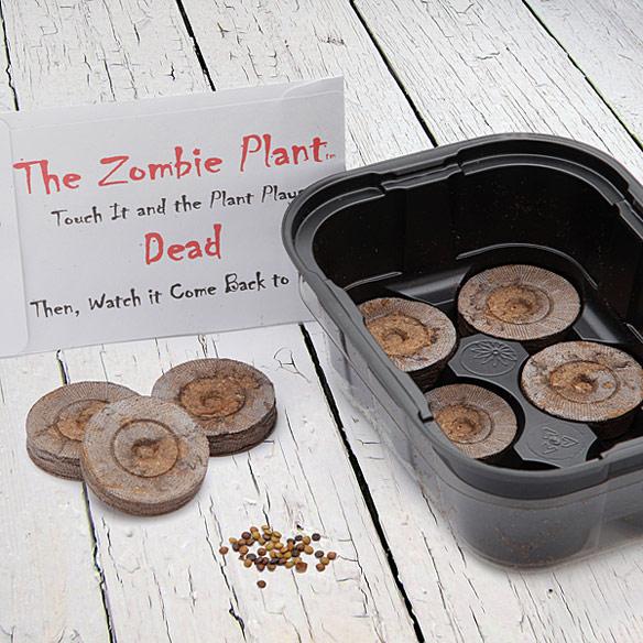 Zombie Plant Kit
