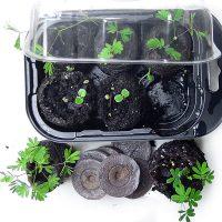 Zombie Plant Kits