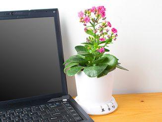 USB Flower Pot
